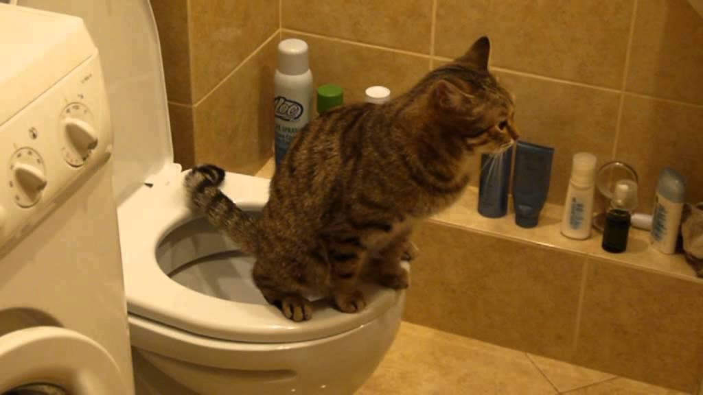 Как сделать так чтобы кот сходил в туалет